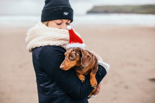 Minature Dachshund with a santa hat on Polzeath beach