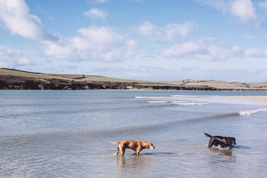 Dogs splashing in the water at Rock beach