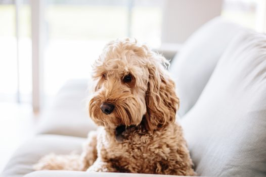 Dogs are welcome in many of our properties