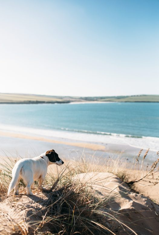 Rock and Daymer Bay beaches are dog friendly all year round