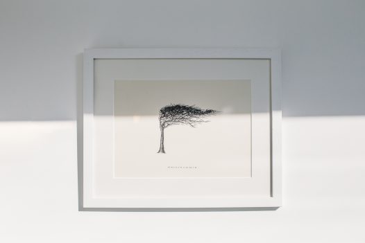 Nicole Heidaripour's wind pruned tree illustration on the wall of the Latitude50 office in Rock