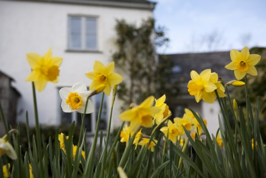Gardens at Penquite Cottage, a self-catering holiday house near Port Isaac, North Cornwall