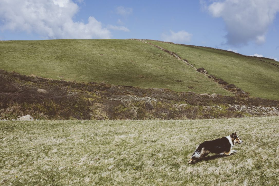 Fields above Port Quin, North Cornwall