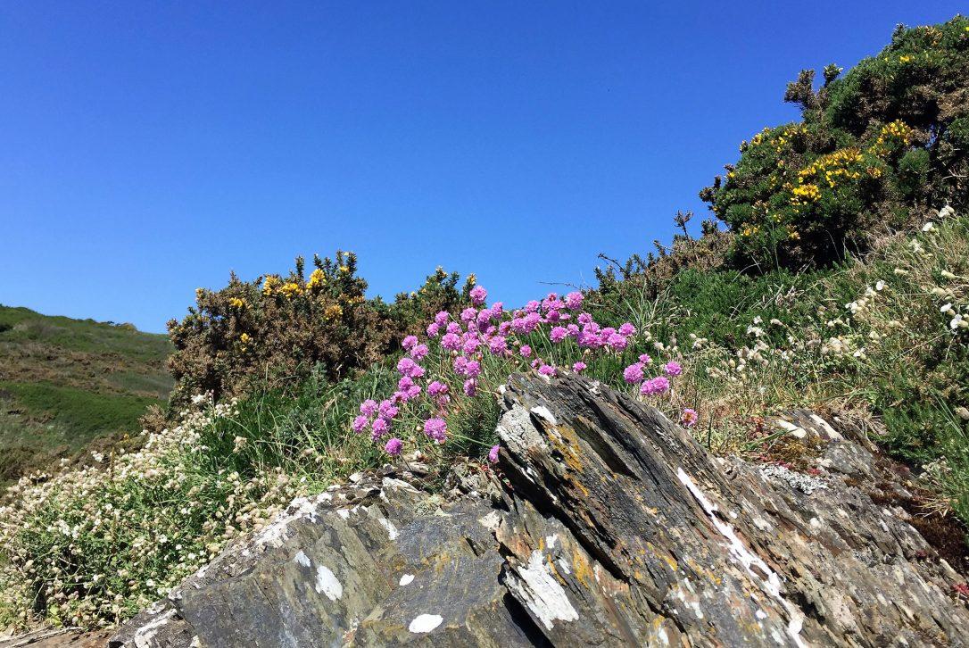 Coastal path near Polzeath, North Cornwall