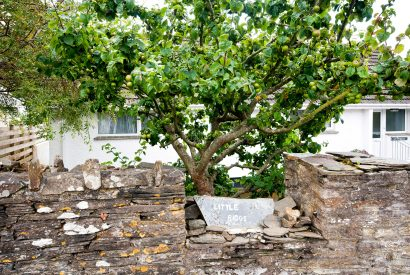 Apple tree outside Little Riggs, a self-catering holiday home in Rock, North Cornwall