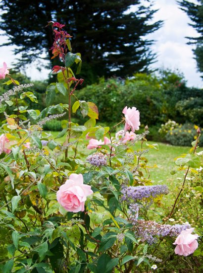 Flowers in the garden at Little Riggs, a self-catering holiday home in Rock, North Cornwall