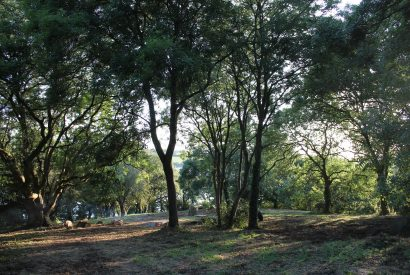 Woodland at The Coach House, a self-catering holiday house in Rock, North Cornwall